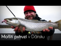 VIDEO: Sea trout fishing in Denmark. English subtitle!