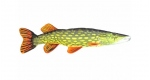 Fish pillow PIKE - lenght 80 cm