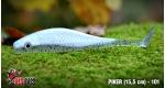 PIKER 15,5 cm - 101